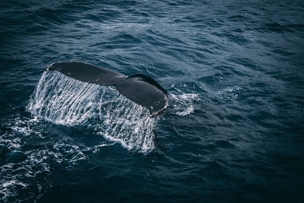 «Un viaje al Pacífico: al encuentro con las ballenas»: el documental del que todos hablan