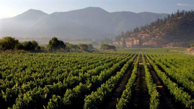 Estos vinos chilenos buscan reducir su impacto ambiental