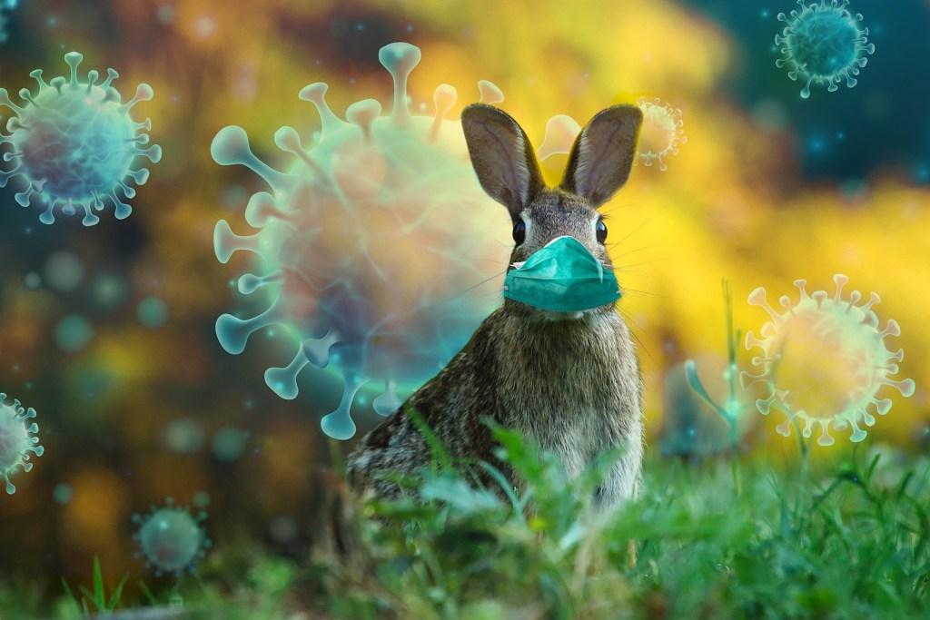 Opinión: El verdadero impacto de la zoonosis