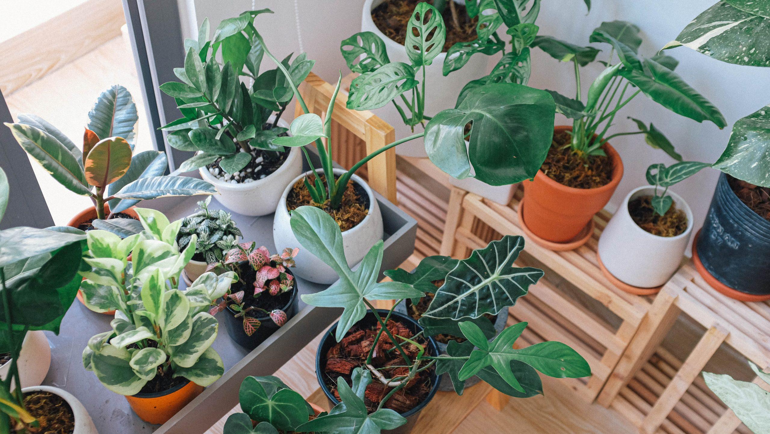 Cómo hacer macetas ecológicas para tu hogar