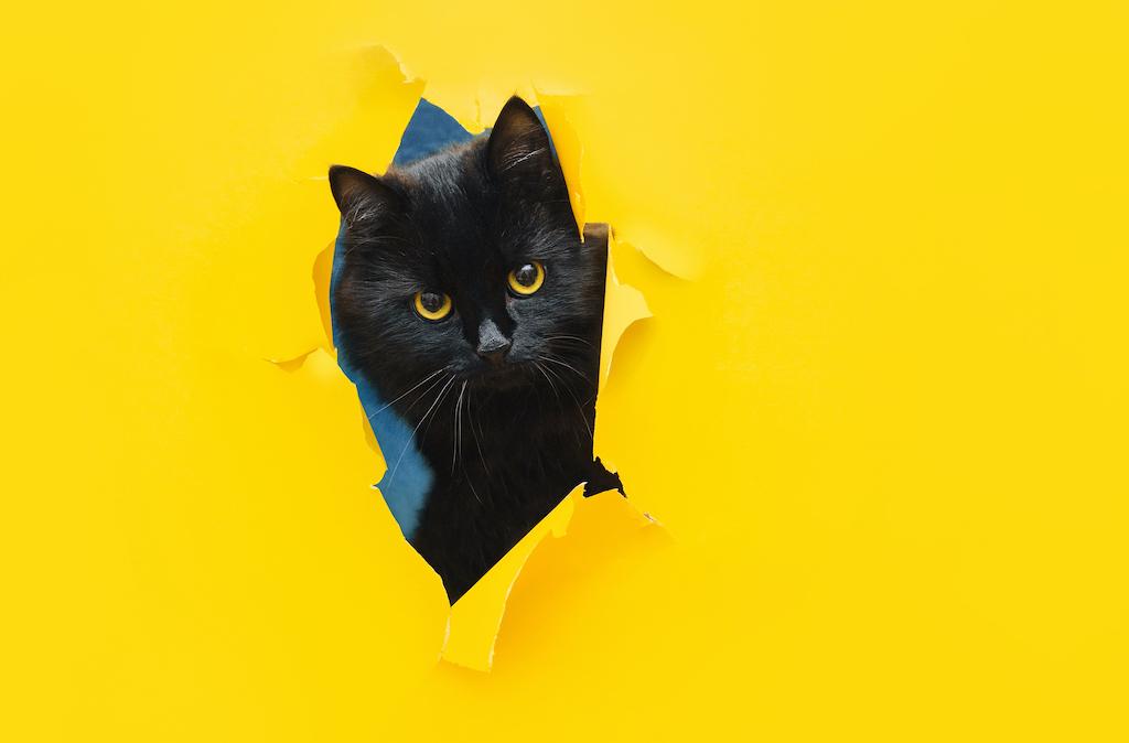 La realidad supera la ficción: una gata ladrona es delatada ¡por su propia dueña!
