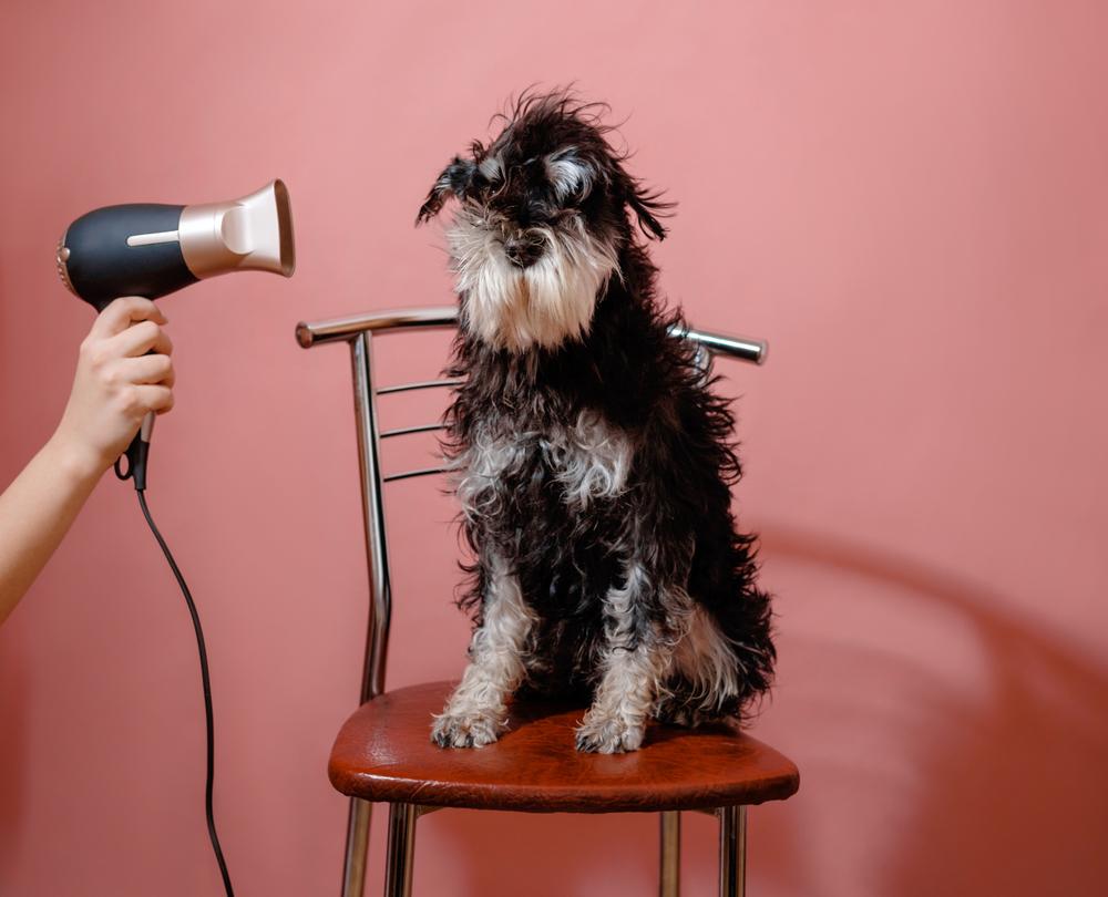 3 cosas raras a las que temen los perros y que se deben evitar