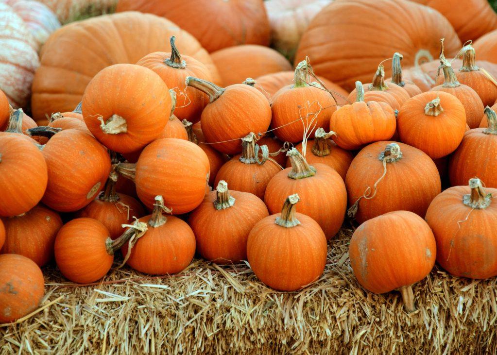 ¿Por qué amamos el otoño? La ciencia tiene varias respuestas