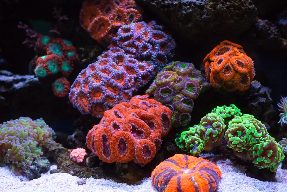 Arrecifes de coral se encuentran en riesgo de desaparecer, según investigación
