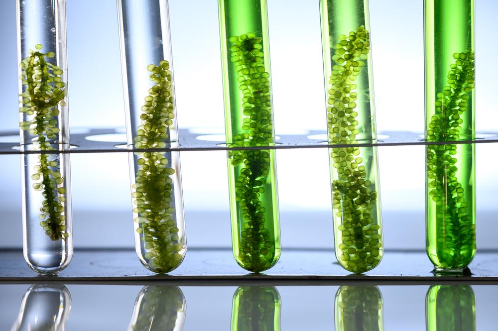 Plástico biodegradable hecho a base de algas marinas, ¡sí es posible!
