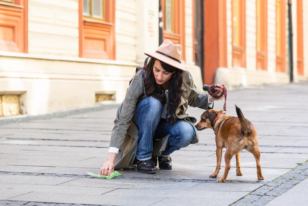 Hacer composta con popó de perro y gato ¡es posible y ecológico!