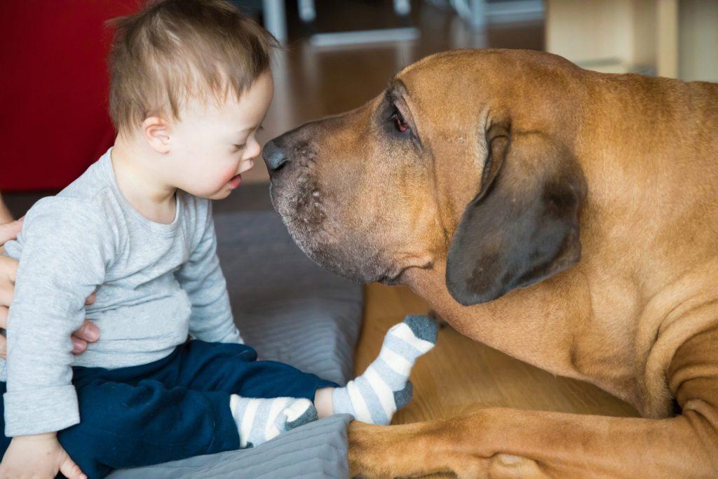 ¿Conocías esta terapia asistida con perros para niños, adolescentes y adultos mayores?