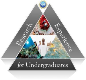 REU - Research Experience for Undergraduates