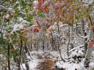 Trails First Snow