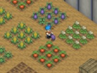 301070-harvest-moon-64-nintendo-64-screenshot-in-the-greenhouse-you