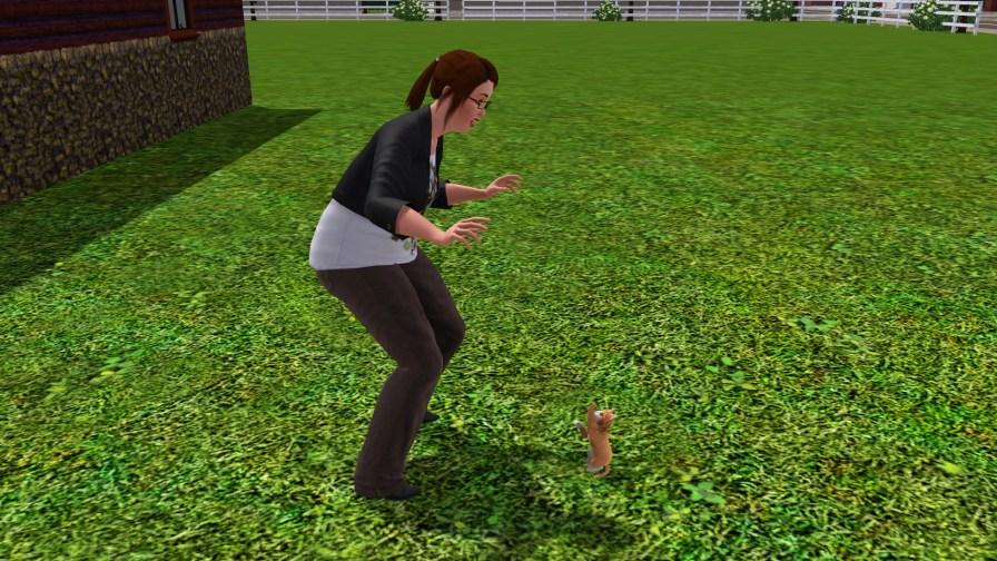 Terra playing with Felis
