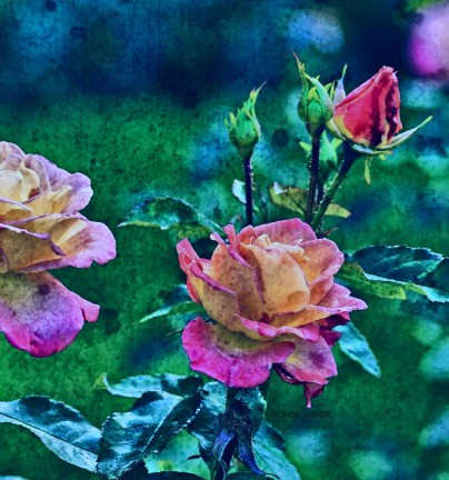 Image of Free Verse Ode to Birth or Rosebuds