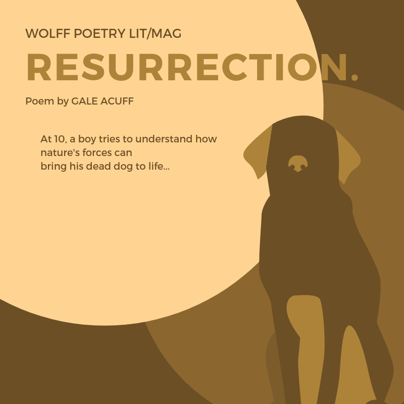 Resurrection  Poem by Gale Acuff - Wolff Poetry Literary