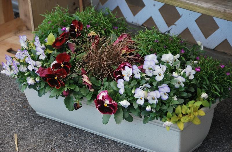 Pansy Flower Box