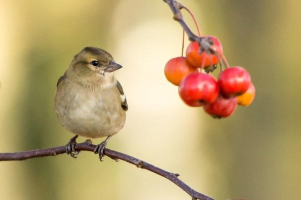 bird & berries