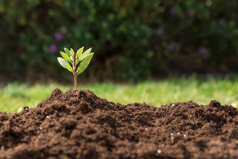 compost-topsoil