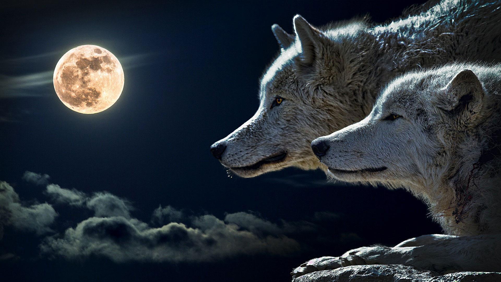 Wolfy's Tales by Peter W Schaper