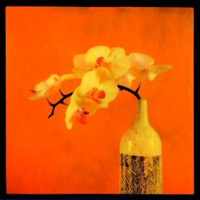 Orchidee 01
