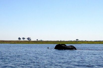 Elephant crossing the river right in front of us!