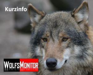 Wolf im Zoo Nordhorn (Foto: Vogler)