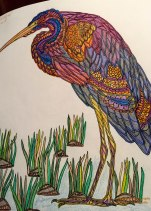 Purple Heron - native to Africa