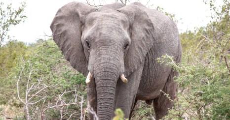 Südafrika Safari: Naledi Enkoveni Camp