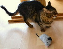 Hermine - sucht noch ein Heim mit Katzengesellschaft