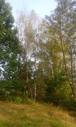 Herbst4