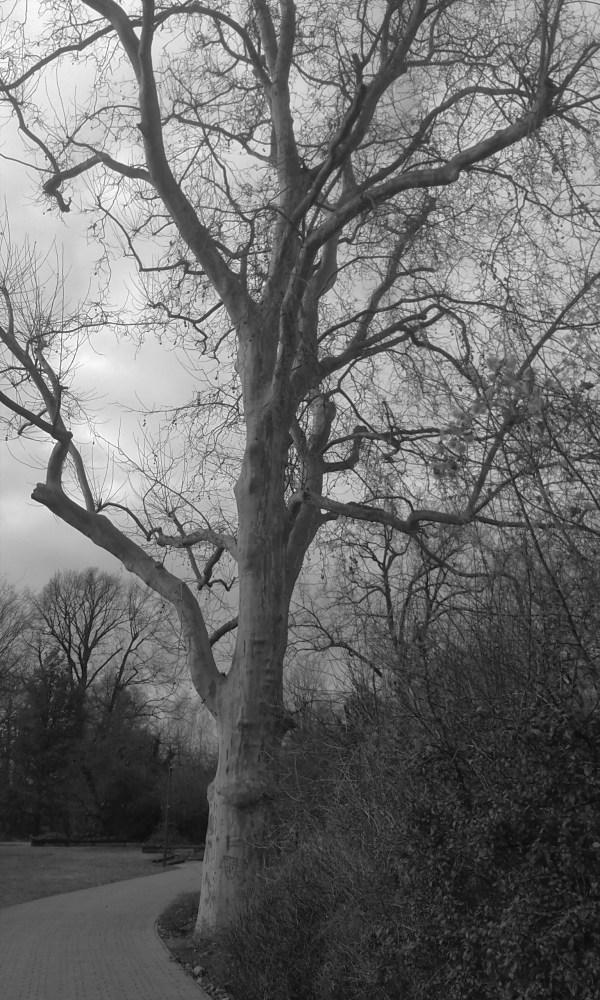 Old Tree (2/2)