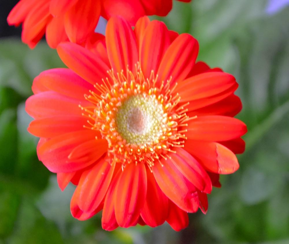 Flower Power 14 (1/3)