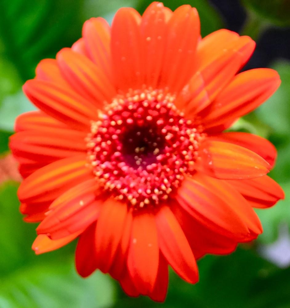 Flower Power 14 (2/3)