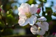 Blüten2