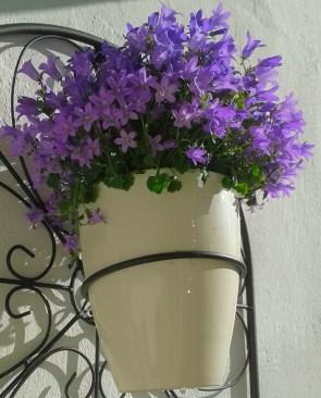 Blüten5