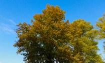 Herbst8