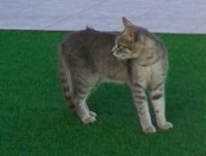 Katzen13