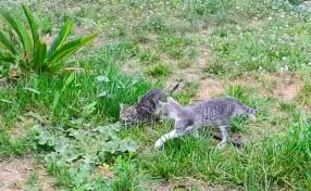 Katzen5