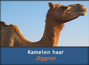 Informatie over Kamelenhaar