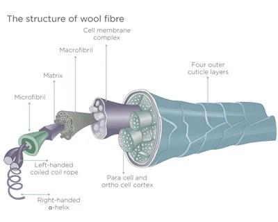 Structuur van een wolvezel