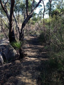 Hike from Heathcote to Waterfall