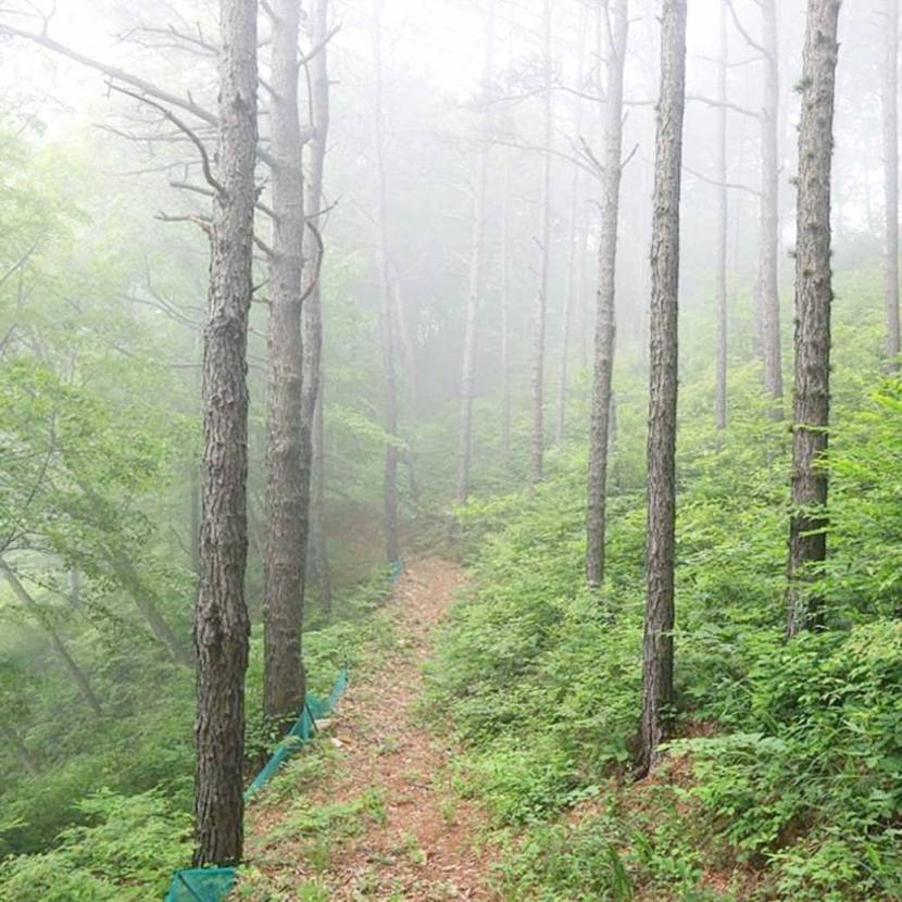A foggy trail in the morning