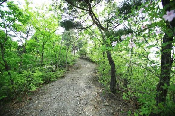 Mountain trail in Wolmyeongdong