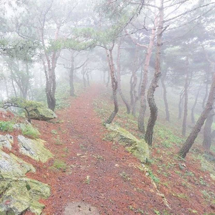 Tiger hiking trail in Wolmyeongdong on a foggy day