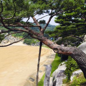 The Jehovah Jireh Pine Tree is a red pine tree found by Pastor Jung Myung Seok in Wolmyeongdong