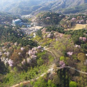 Wolmyeongdong Natural Temple