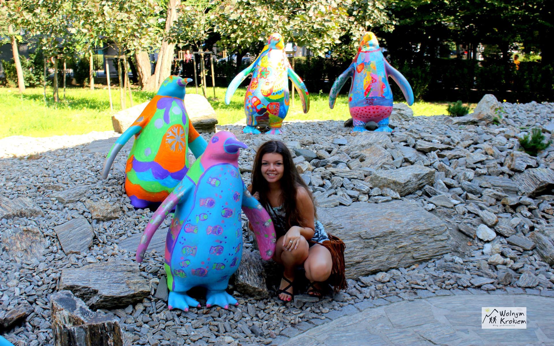 Zoo Wrocław pingwiny