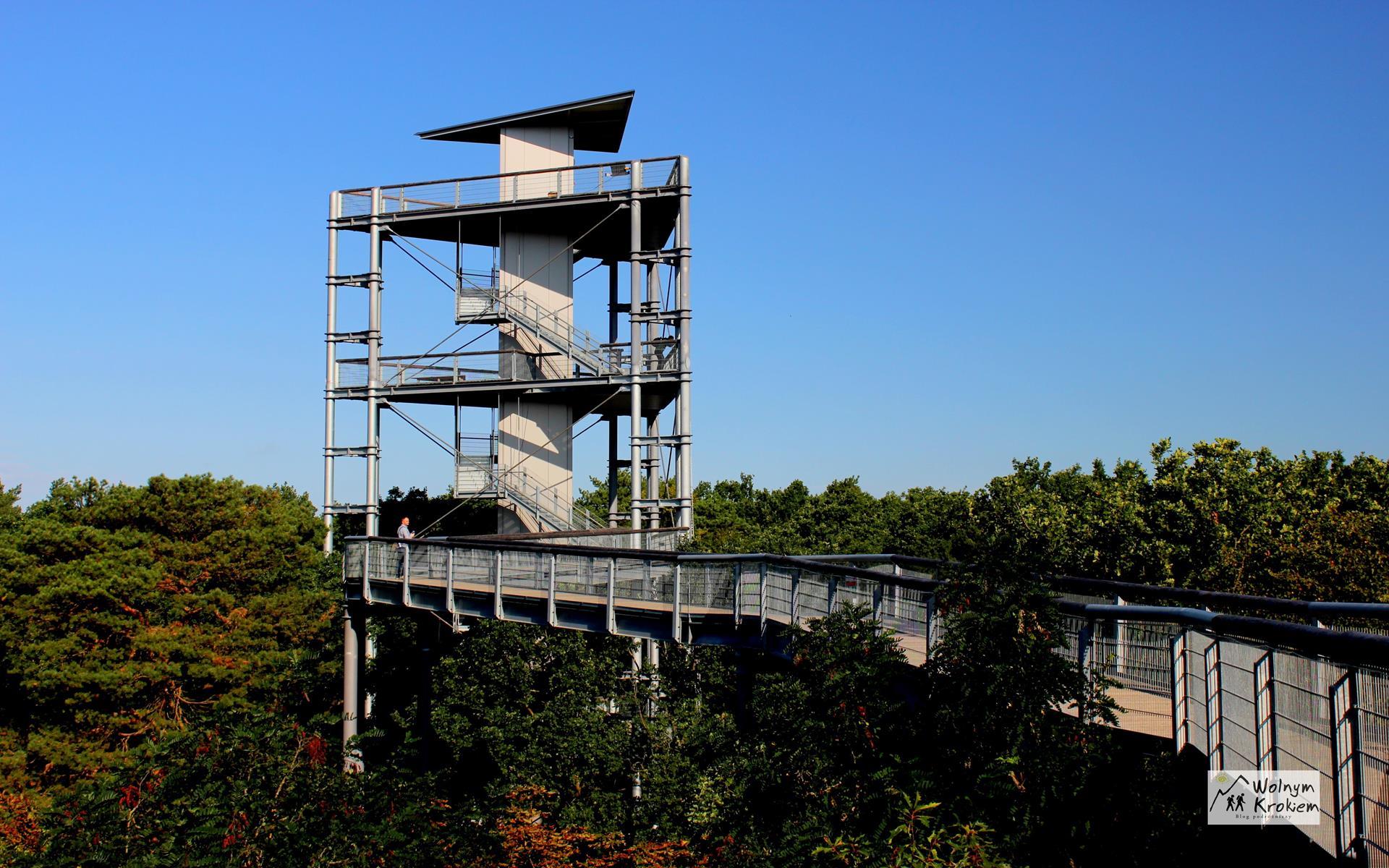 Beelitz ścieżka w koronach drzew