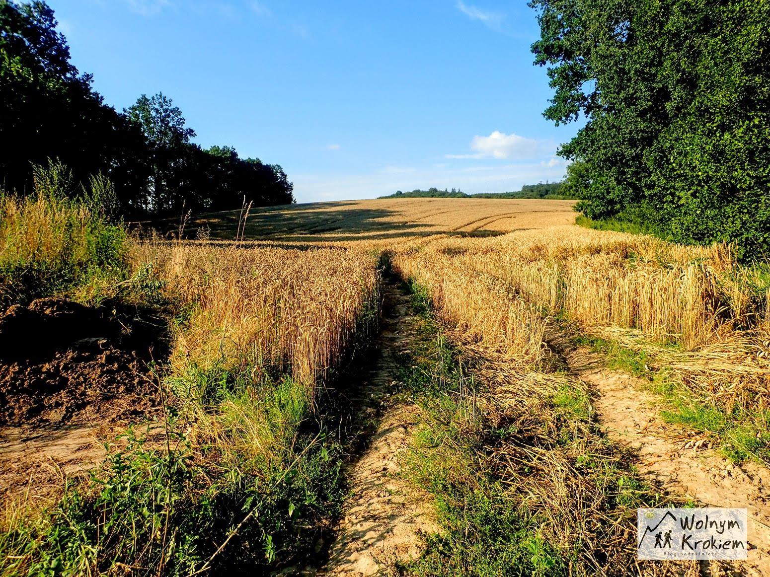 Ostra Góra wieża widokowa Dolny Śląsk