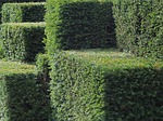 hedge photo