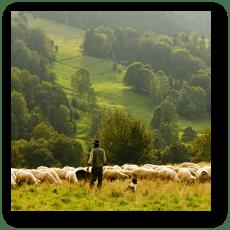羊飼い (イメージ)