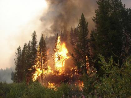 tree-torching-warren.jpg
